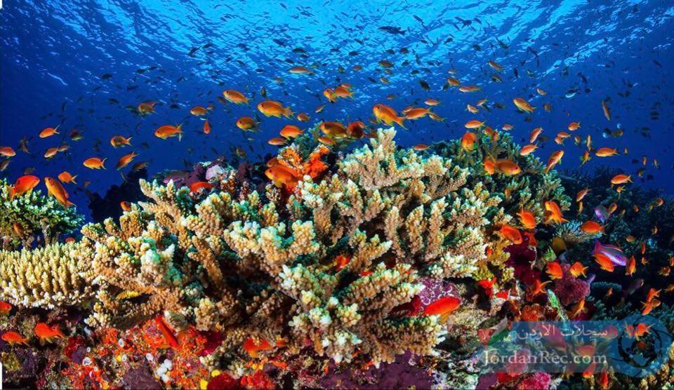 البحر الأحمر في طابا