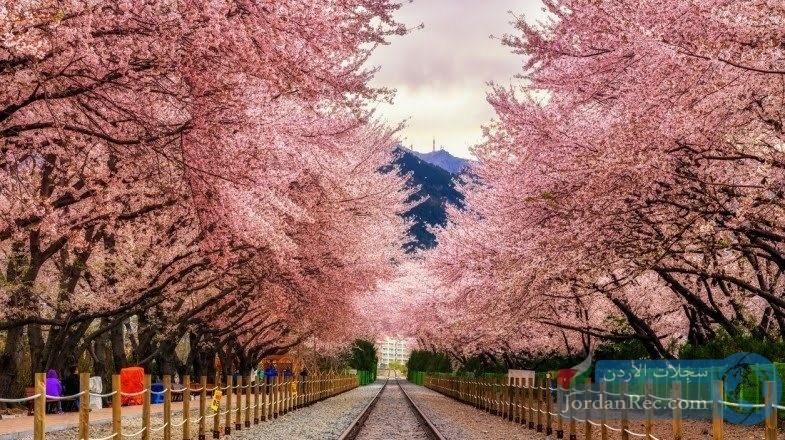 ما لا تعرفه عن السياحة والطبيعة في كوريا الجنوبية