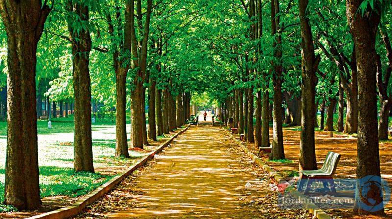 أفضل الأماكن للزيارة في بنغالور