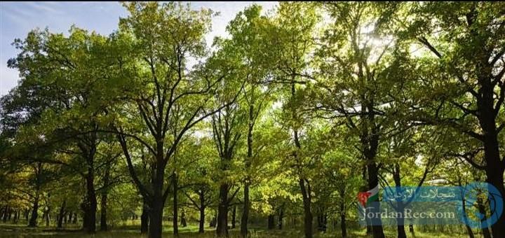 تعرف على فوائد الأشجار