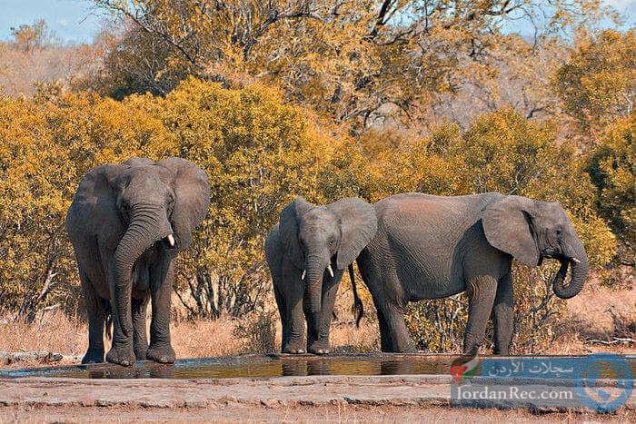 أبرز أماكن المغامرات في جنوب إفريقيا